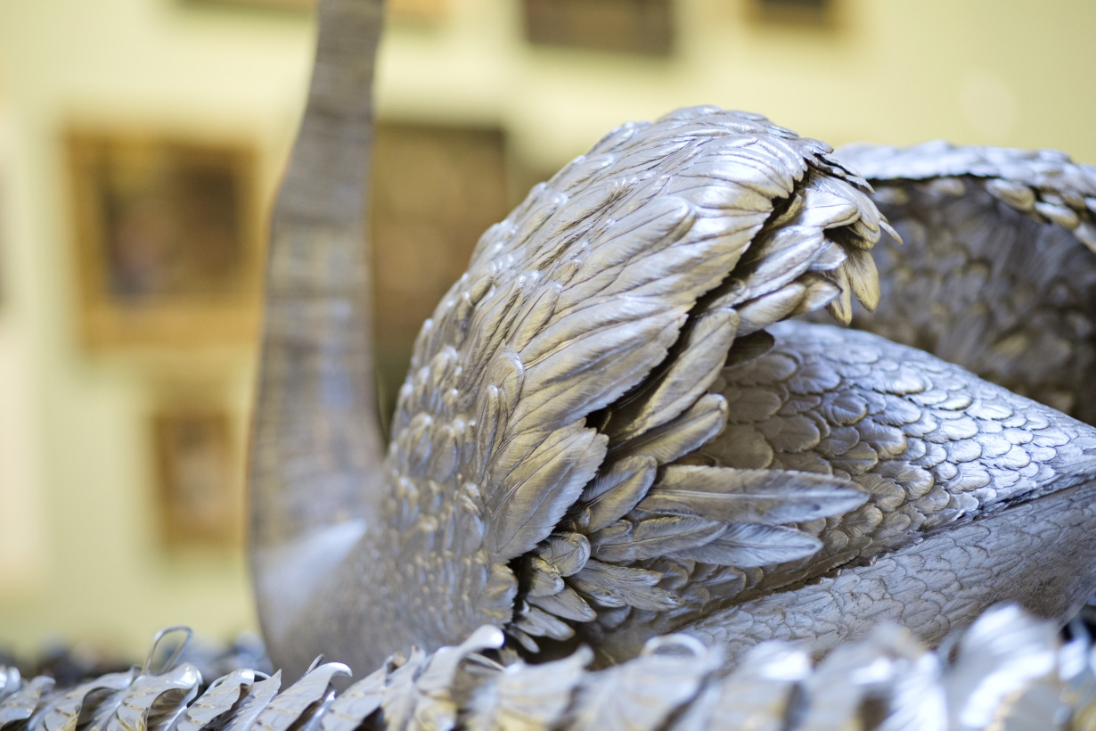 automate-cygne-james-cox-detail-corps-plumes