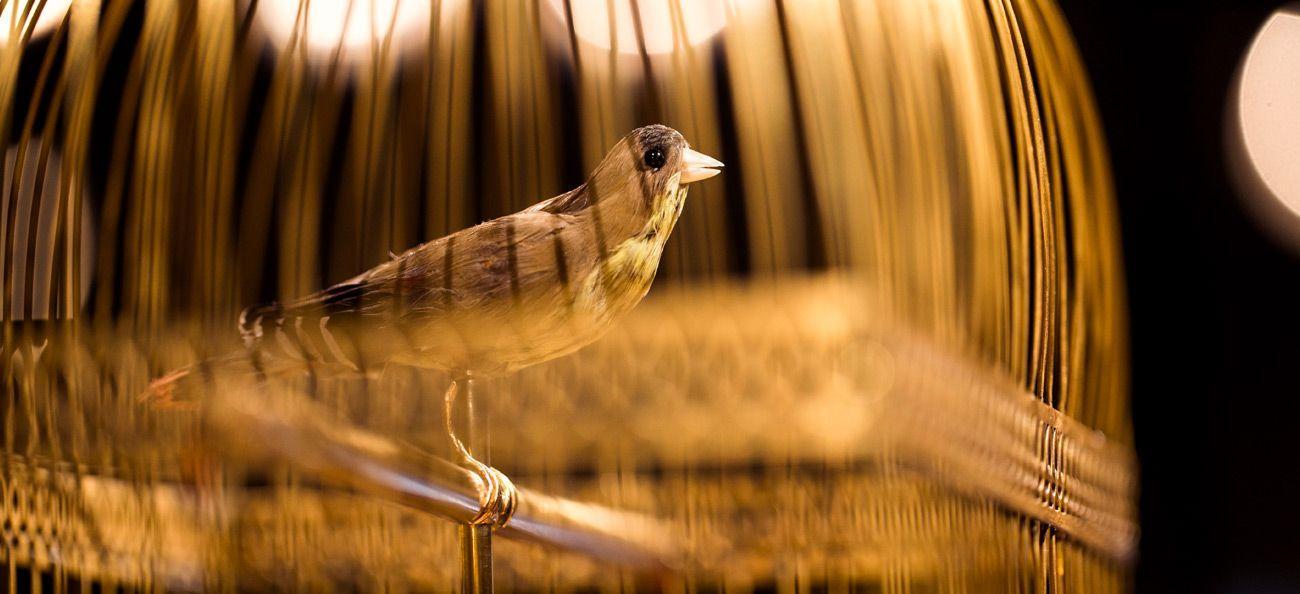 automate-oiseau-chanteur-chantant-jaquet-droz-histoire