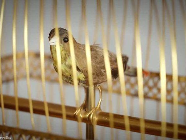 oiseau-chanteur-histoire-automate-jaquet-droz